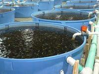 Бассейны для рыбы в Ростове-на-Дону